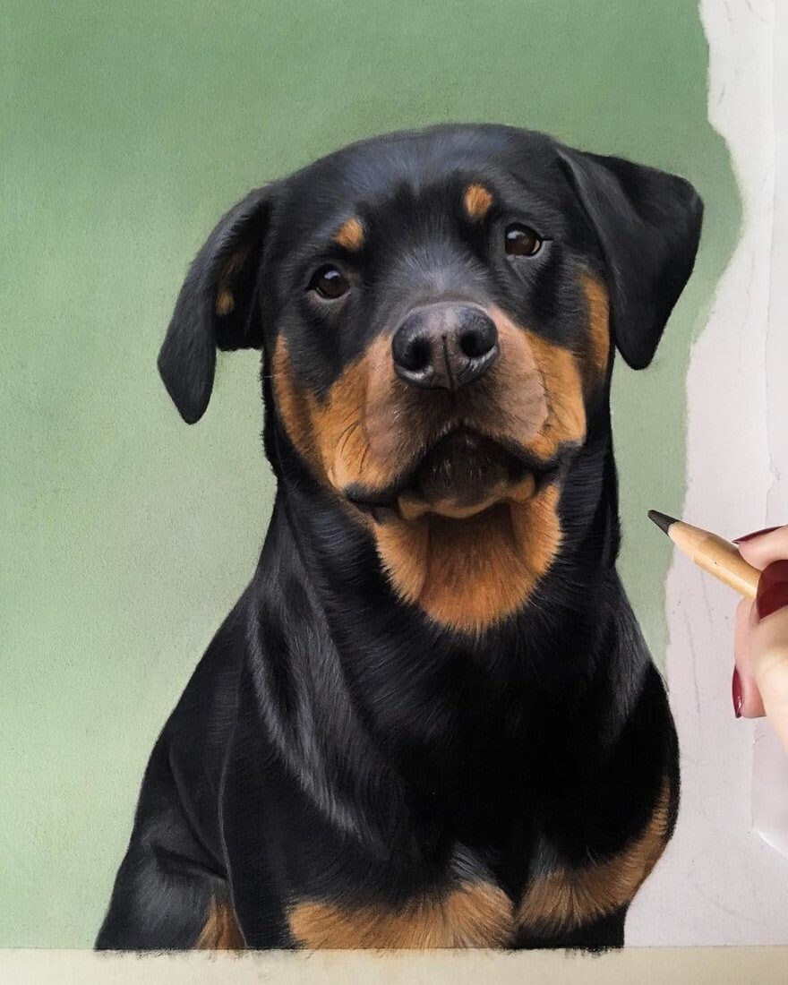 10-Rottweiler-Danielle-Fisher-Dog-Portraits-with-Pastel-Drawings-www-designstack-co