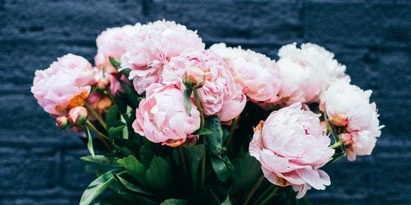 beautiful beautiful flowers bloom 424670