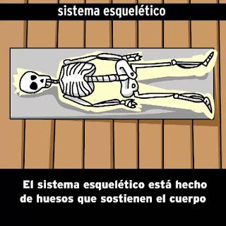 https://esp.brainpop.com/salud/sistemas_del_cuerpo/esqueleto/