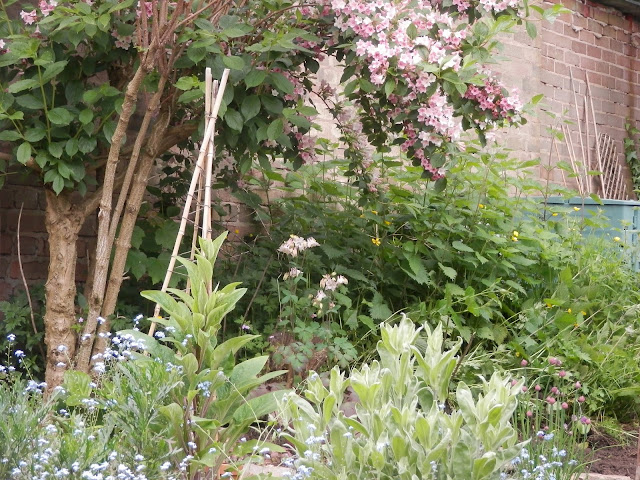 Garden, May 2016.  secondhandsusie.blogspot.com
