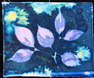 Wet Cyanotype_Sue Reno_Image 167