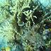 Indahnya Alam Bawah Laut Kepulauan Spermonde di Sulsel