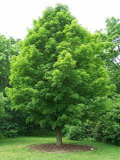 bosques comestibles
