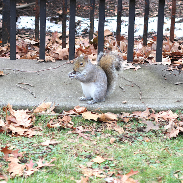 Squirrels of New York City | Linzer Lane Blog