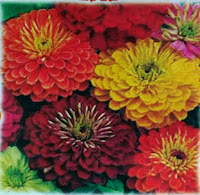 zinnia double mix flower seeds