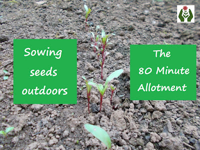 Sowing seeds outdoors 80 Minute Allotment Green Fingered Blog
