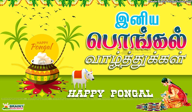 Tamil Pongal Greetings for Wallpapers online, Tamil Pongal Messages and Wallpapers Free, Awesome Tamil Language Pongal Lines online, Happy Pongal Best Greetings and Messages, Tamil Pongal Quotations online, Tamil Pongal SMS for Gf, Tamil Pongal Festival Quotes & Wallpapers, Tamil New Pongal Festival Greetings and Gifts Cards Online.tamil Pongal 2016 Greetings and Messages in Tamil Language, Popular Tamil Makara Sankranti Wallpapers with Nice QUotations, New Tamil Language Makara Sankranti Wishes for Friends, Makara Sankranti Tamil Greetings online, Makara Sankranti Tamil Festival Celebrations, Makara Sankranti Pot Images and Nice Kavithai Greetings, Tamil Popular Makara Sankranti Quotations Free.