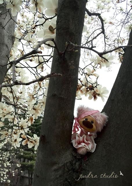 Spring, magnolia