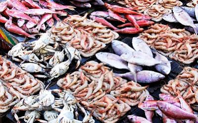 Pengertian Ikan dan Perikanan