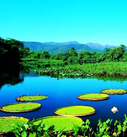 Explore the Pantanal in Brazil ~ World Travel Agency