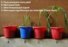 cara menyuburkan tanaman dengan cepat