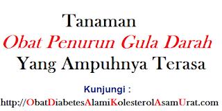 Tanaman Obat penurun Gula darah yang ampuhnya terasa