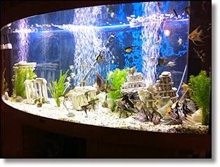 Pets Are Family Too : Freshwater Aquarium Setup   Fish Tank Setup