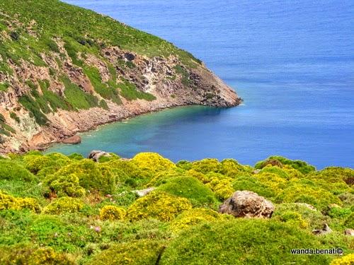 Fioritura primaverile a Patmos