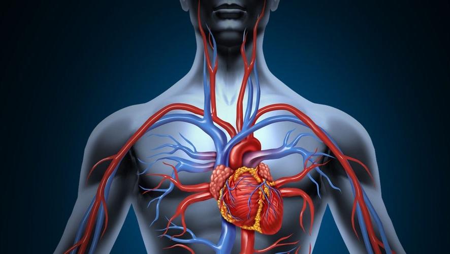 Como melhorar a circulação sanguínea naturalmente (baseado em pesquisas)