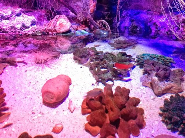 Various coral species