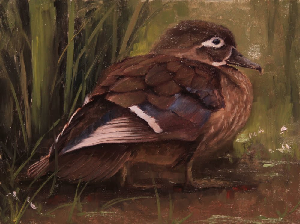 Oil Paintings By Jason Tako Female Wood Duck Study Oil