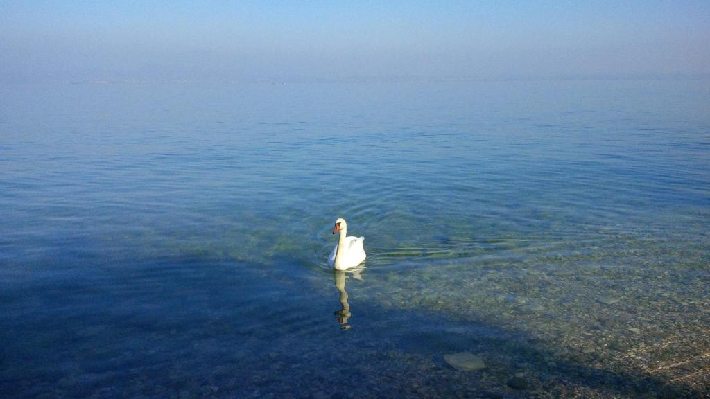 A beautiful swan glides on the blue waters of Lake Garda, Italy's largest lake