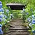 Du lịch Nhật Bản tháng 6 có gì ?