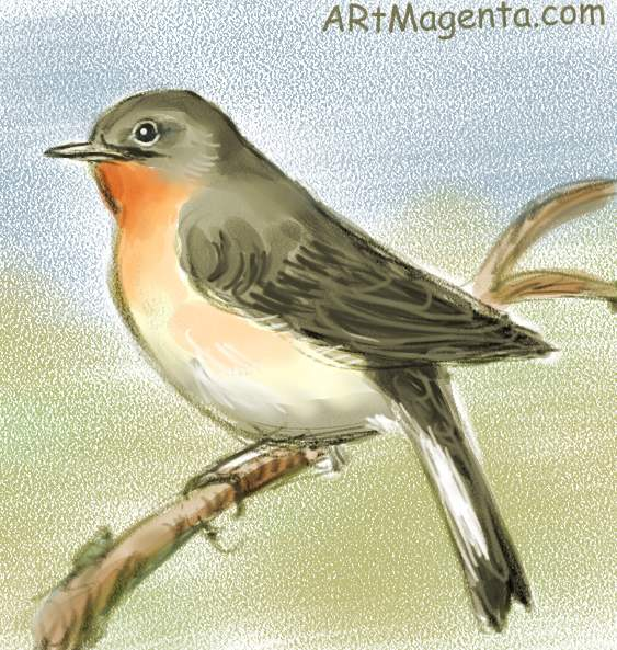 Red breasted flycatcher sketch painting. Bird art drawing by illustrator Artmagenta