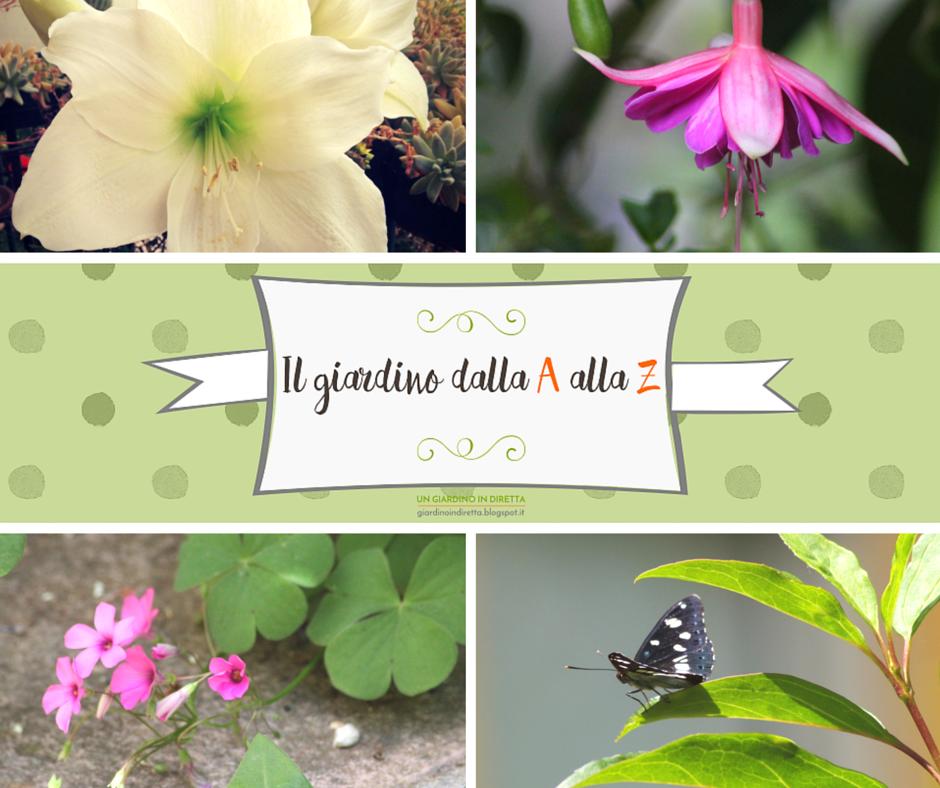 il giardino dalla a alla z i fiori della settimana