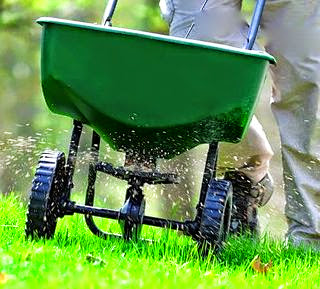 Fertilizing a lawn.