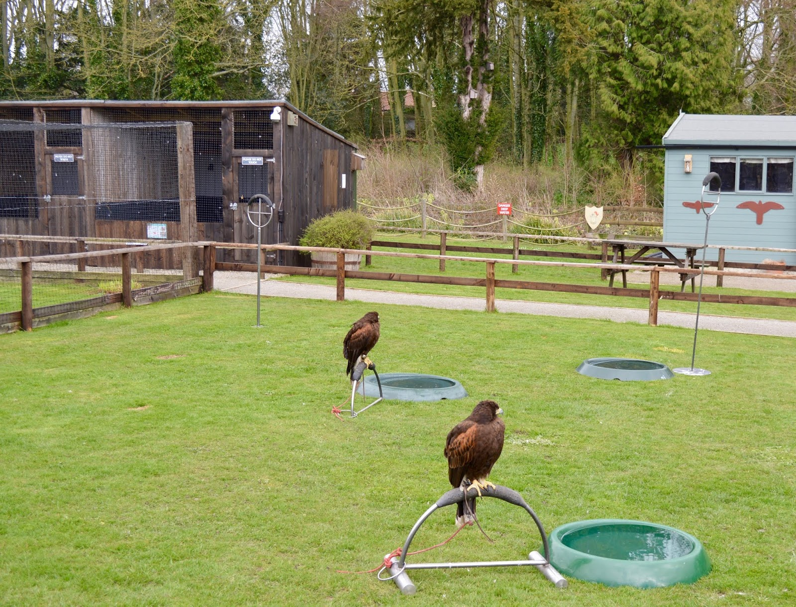 Sunday Lunch, Playgrounds & Birds of Prey at Walworth Castle, Darlington  - birds of prey