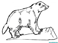 Badger Animal Printable Coloring Pages