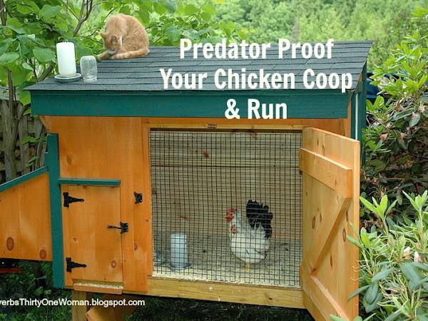 Predator Proof Your Chicken Coop and Run
