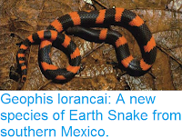 https://sciencythoughts.blogspot.com/2016/08/geophis-lorancai-new-species-of-earth.html