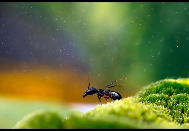 صور بعض الحشرات سبحان الله 5964882650_e8b271a15