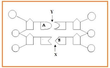 Biologi gonzaga february 2013 perhatikan diagram sepotong molekul dna ccuart Images