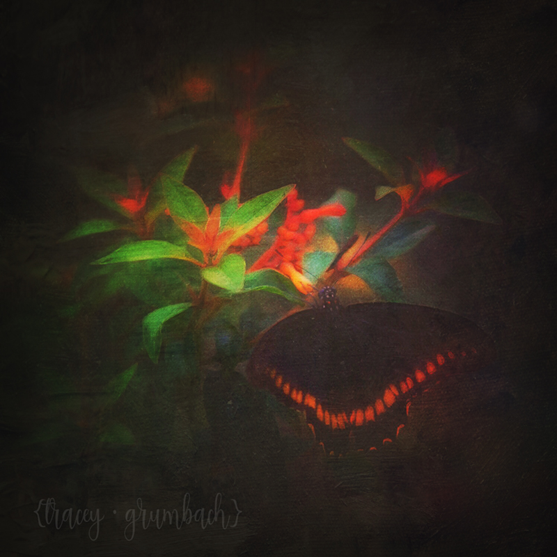 digital painting of a butterfly feeding on flower
