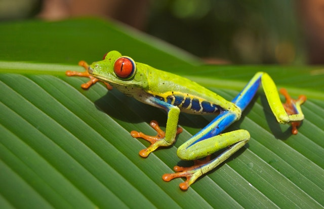 kisah inspirasi dari katak