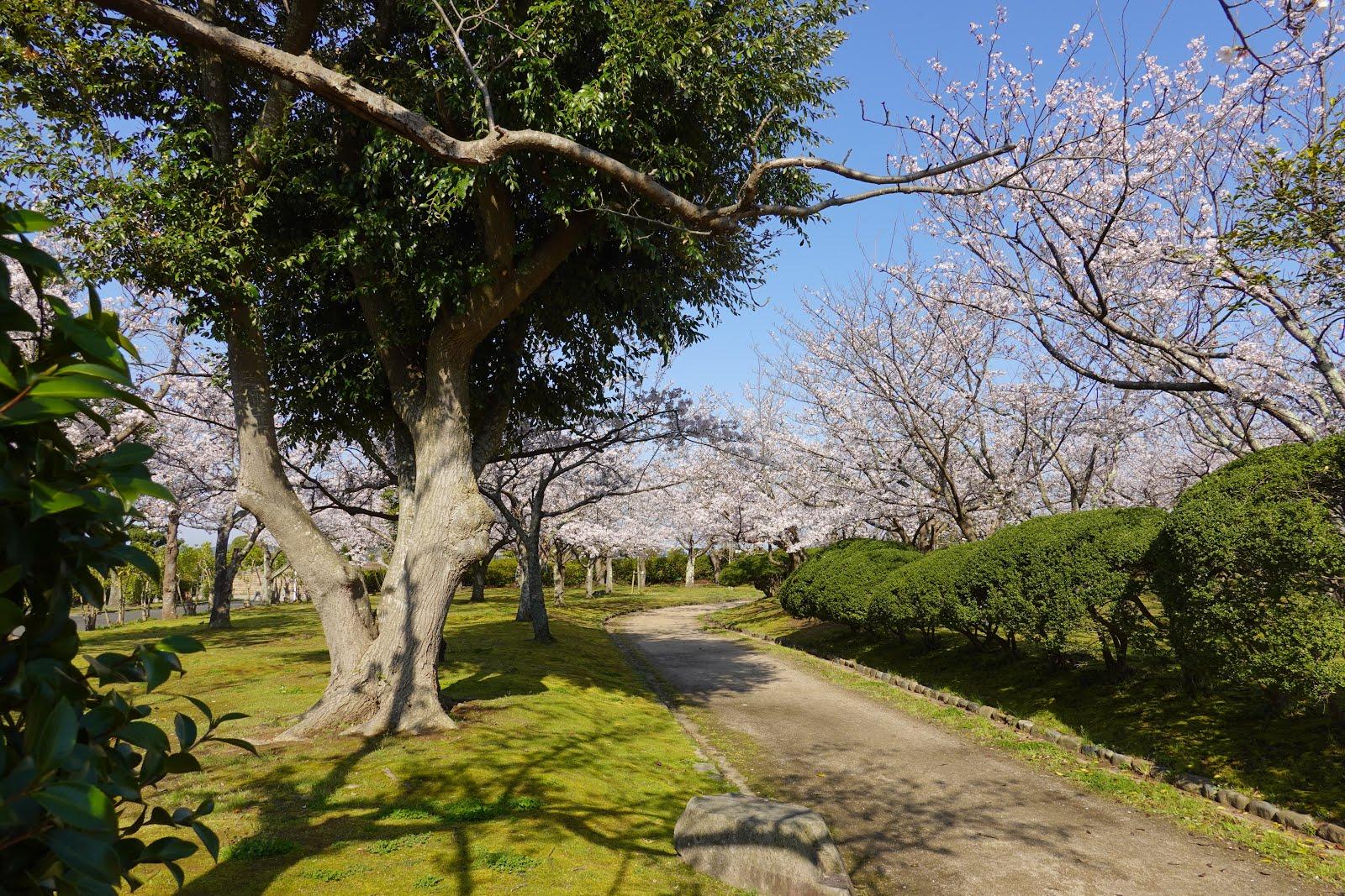 今日の散歩道フォトライブラリー: 2020 04 04 湊山公園 </p>  </div><!-- .entry-content -->     </article><!-- #post-## -->  <nav class=