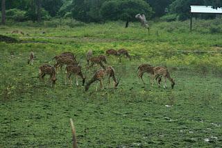 Kinnerasani Sanctuary deer park