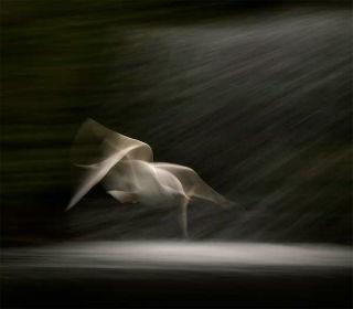 Zbor zboara zburat iubire dragoste