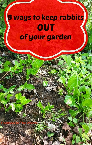8 Tips To Keep Rabbits Out Of Your Garden Feathers In