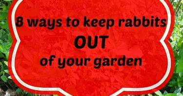 8 Tips to keep rabbits out of your garden - Feathers in ...