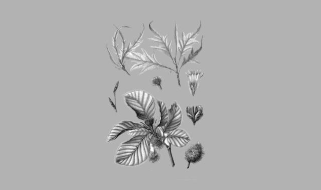 Buche Blätter und Früchte-Gedichte