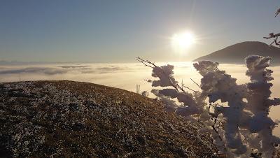 Nebelmeer Oensinger Roggen