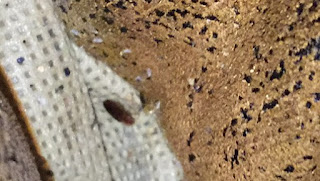 bed bugs office atlanta, bed bugs atlanta, bed bugs savannah,