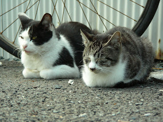 箱座りしているキジトラと白黒猫