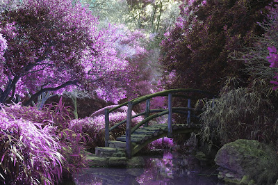 A mass of purple blooming trees and bushes surrounding a curved brown bridge. Photo by Cosmic Timetraveler on Unsplash