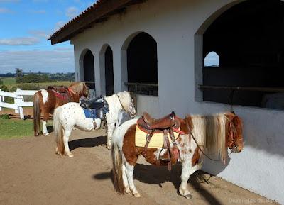 Colônia Witmarsum - Palmeira/PR - pôneis Ponyland