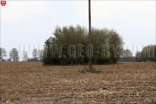 Кусты в сжатом поле у деревни Бобовня