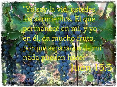 YO SOY LA VID JUAN 15:5