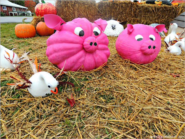 Calabazas Decoradas para Halloween: Cerditos Rosas