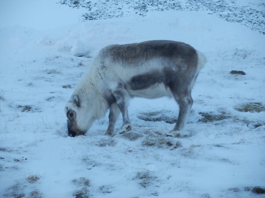 reno-svalbard-longyearbyen-noruega-enlacima