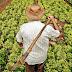 Prefeitura de Ruy Barbosa fortalece apoio a agricultura local e fecha contrato em mais de R$ 240 mil para aquisição de gêneros alimentícios